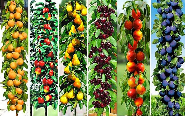 Покупка растений в интернет-магазине